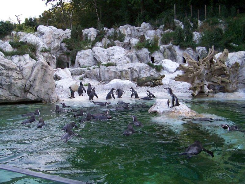 A bécsi állatkert pingvinjei