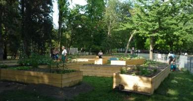 Közösségi kert – Ahrenbergpark. Copyright: MA 42