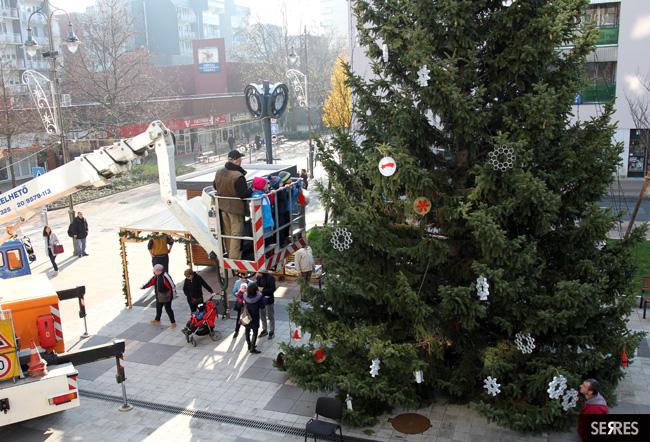 Fenyőfa, karácsonyfa