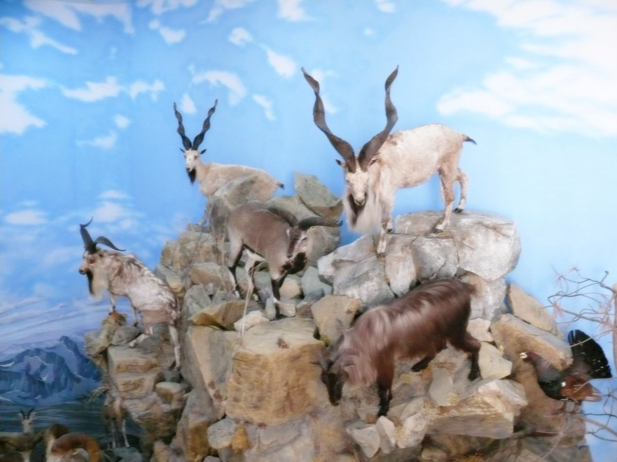 Keszthely, vadászati múzeum